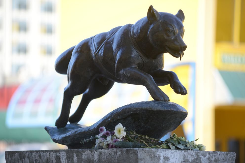 Several bunches of flowers and two signs mourning the loss of the dogs in the Iditarod are on the sled dog sculpture on Fourth Avenue in downtown Anchorageon Thursday. (Anne Raup / Alaska Dispatch News)