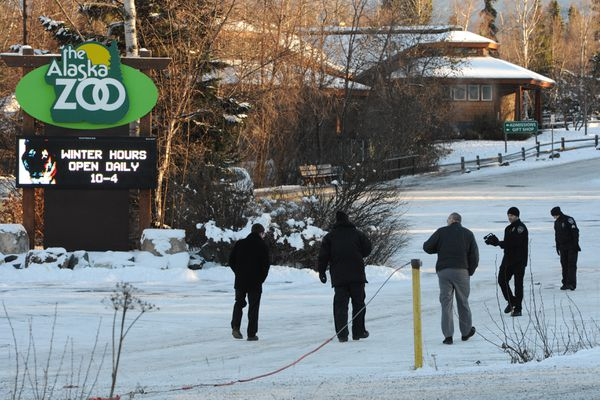 Anchorage Police conduct a death investigation after the body of an adult male was found lying in the lower parking lot at the Alaska Zoo on Monday morning, Nov. 5, 2018. (Bill Roth / ADN)