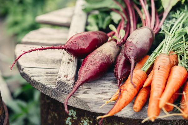 Want to beautiful beets and carrots like this come harvest time? Then you'll have to sacrifice a few now. (Getty)