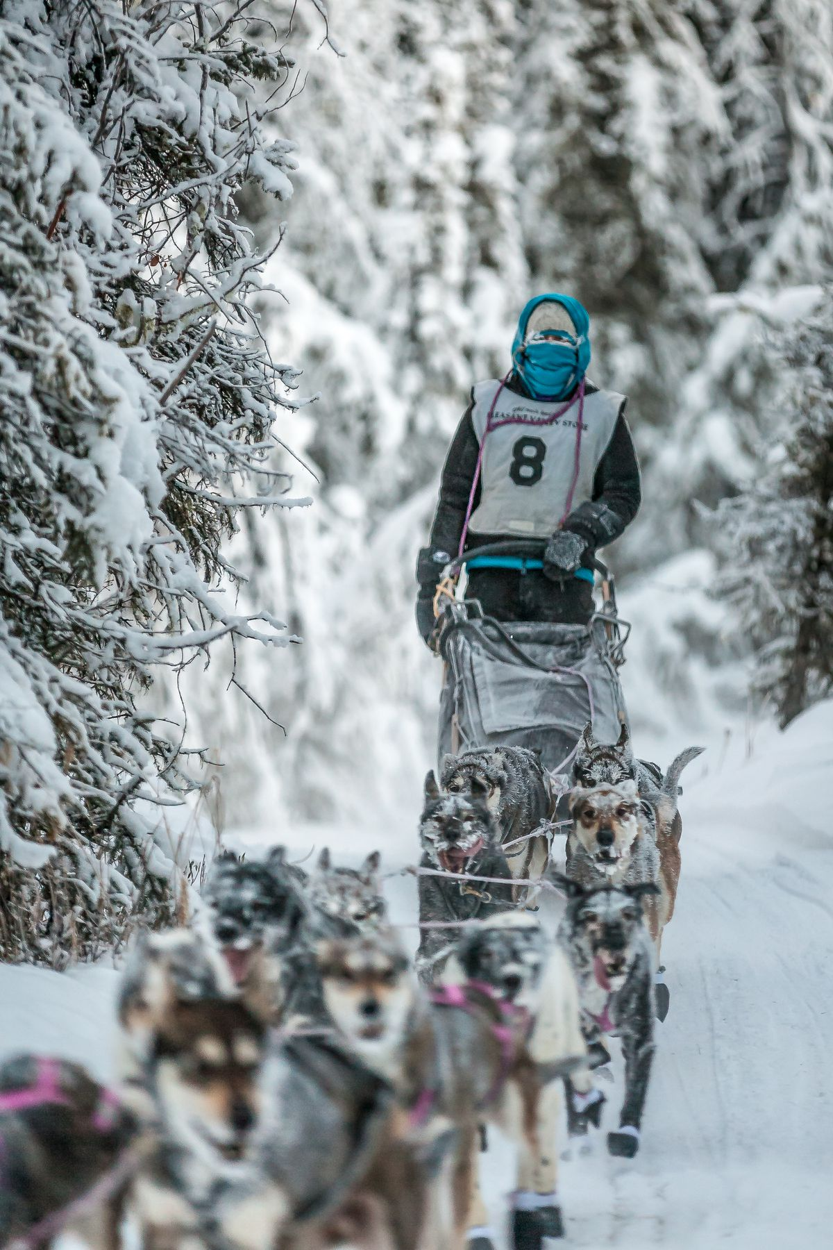 Shaynee Traska of Two Rivers, shown here competing in the Solstice 100, will be a rookie in the 2018 Iditarod. (Photo by Scott Chesney)