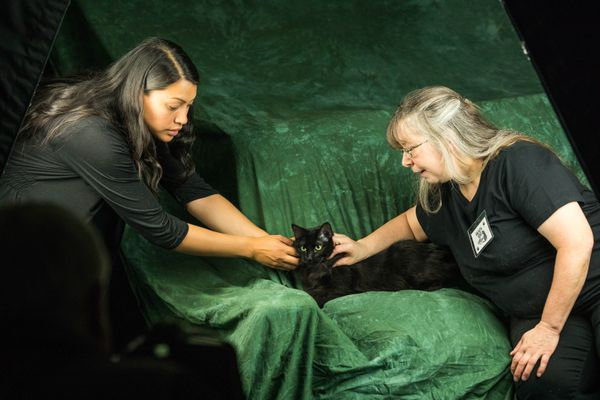 Assistant Nicole Richmond, left, and kennel supervisor Sue Mayo help photographer David Jensen photograph Iva, a black cat currently housed at the Anchorage Animal Care and Control Center on Thursday, Aug. 16, 2018. Friday is Black Cat Appreciation Day, and the animal shelter is offering discounts on adoptions Saturday for the national Clear the Shelters event. (Loren Holmes / ADN)