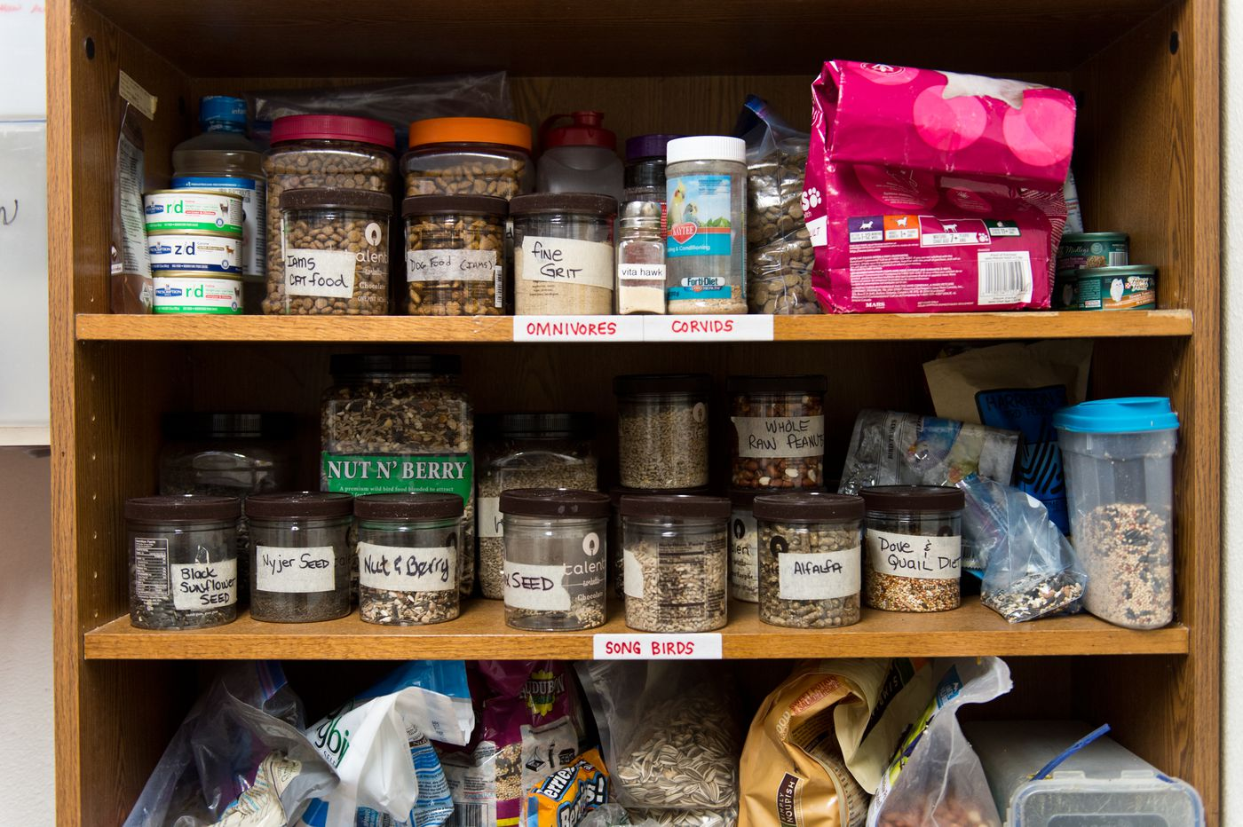 Food for birds stored inside Bird TLC's rehabilitation clinic. (Marc Lester / Anchorage Daily News)