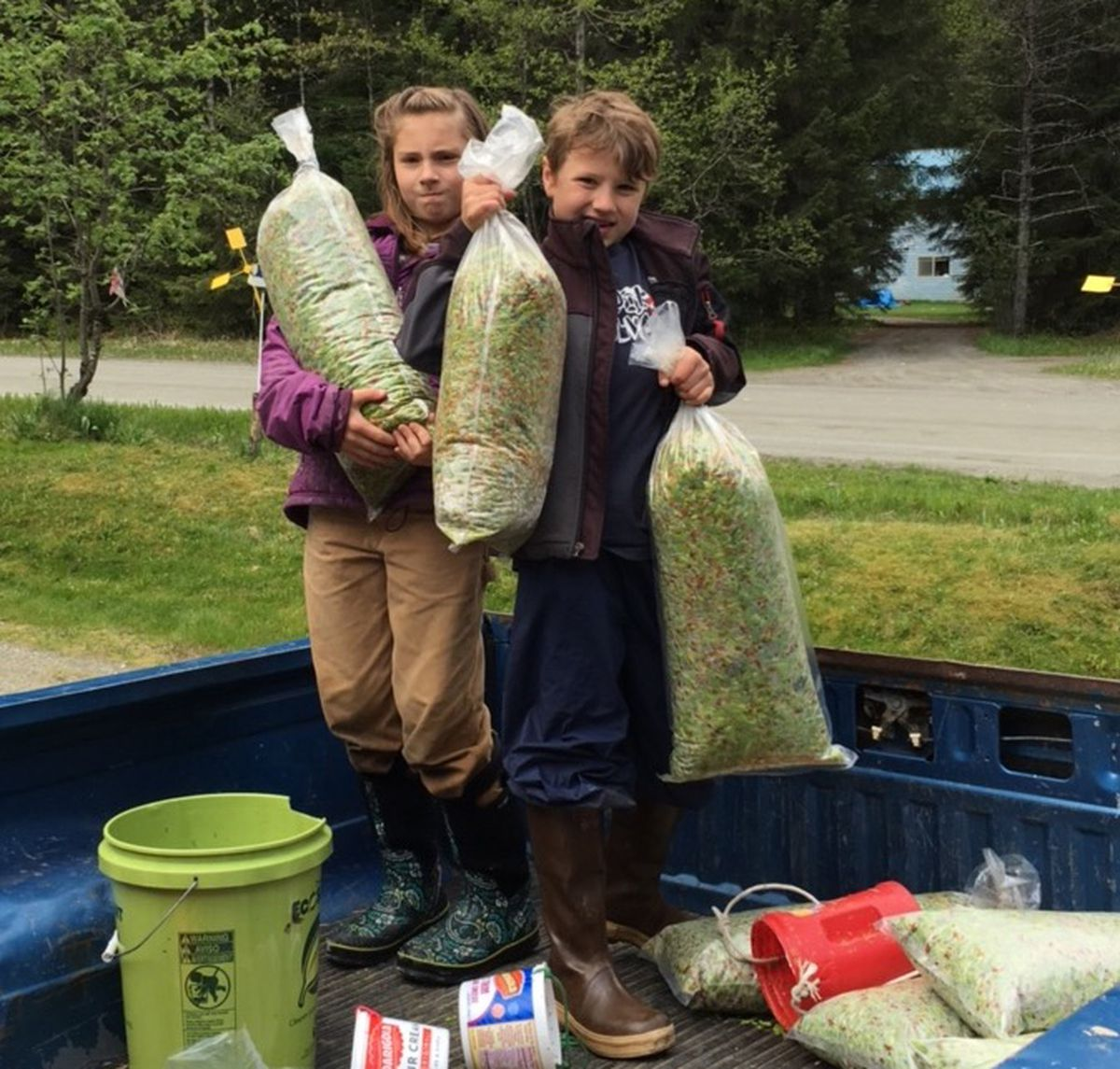 Millie and Phin Patrick, 10 and 8 years old, show off their harvest of Sitka spruce tips Thursday in Gustavu. The tips are harvested by the community and processed by Pep's Packing, which sell the spruce tips to breweries and restaurants in Southeast Alaska. (Pep Scott)