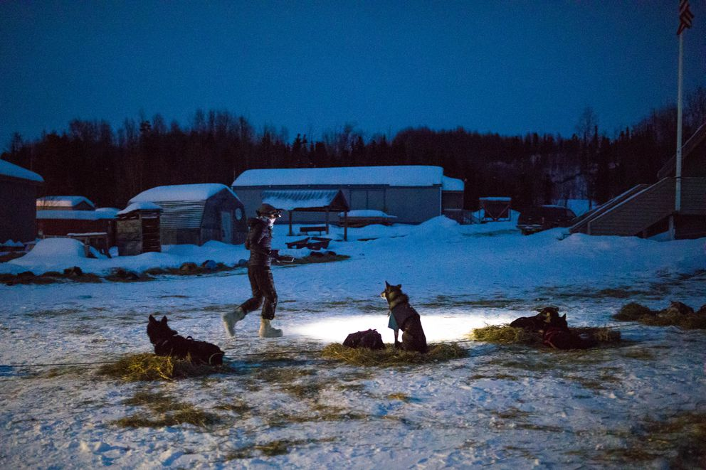 Emily Maxwell feeds her dogs Saturday in Shageluk. (Loren Holmes / ADN)