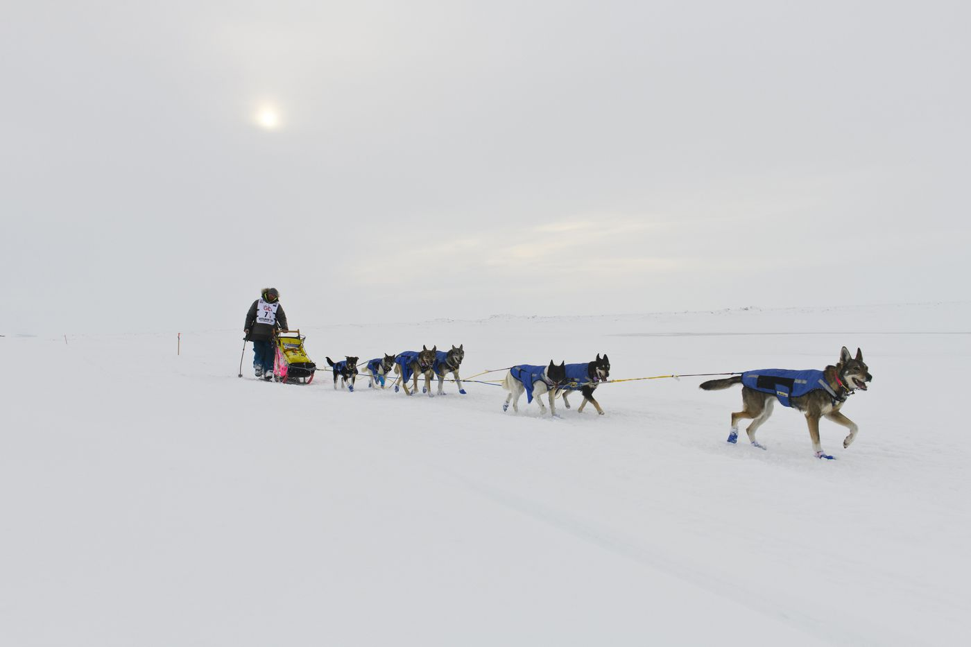Wade Marrs and his team approach Nome. Marrs placed 12th in the Iditarod Trail Sled Dog Race on March 18, 2020. (Marc Lester / ADN)