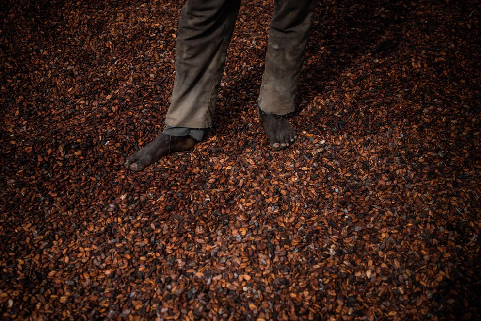 A worker stands on dried cocoa beans outside an Ivory Coast cooperative facility. About two-thirds of the world's cocoa supply comes from West Africa. (Washington Post photo by Salwan Georges)