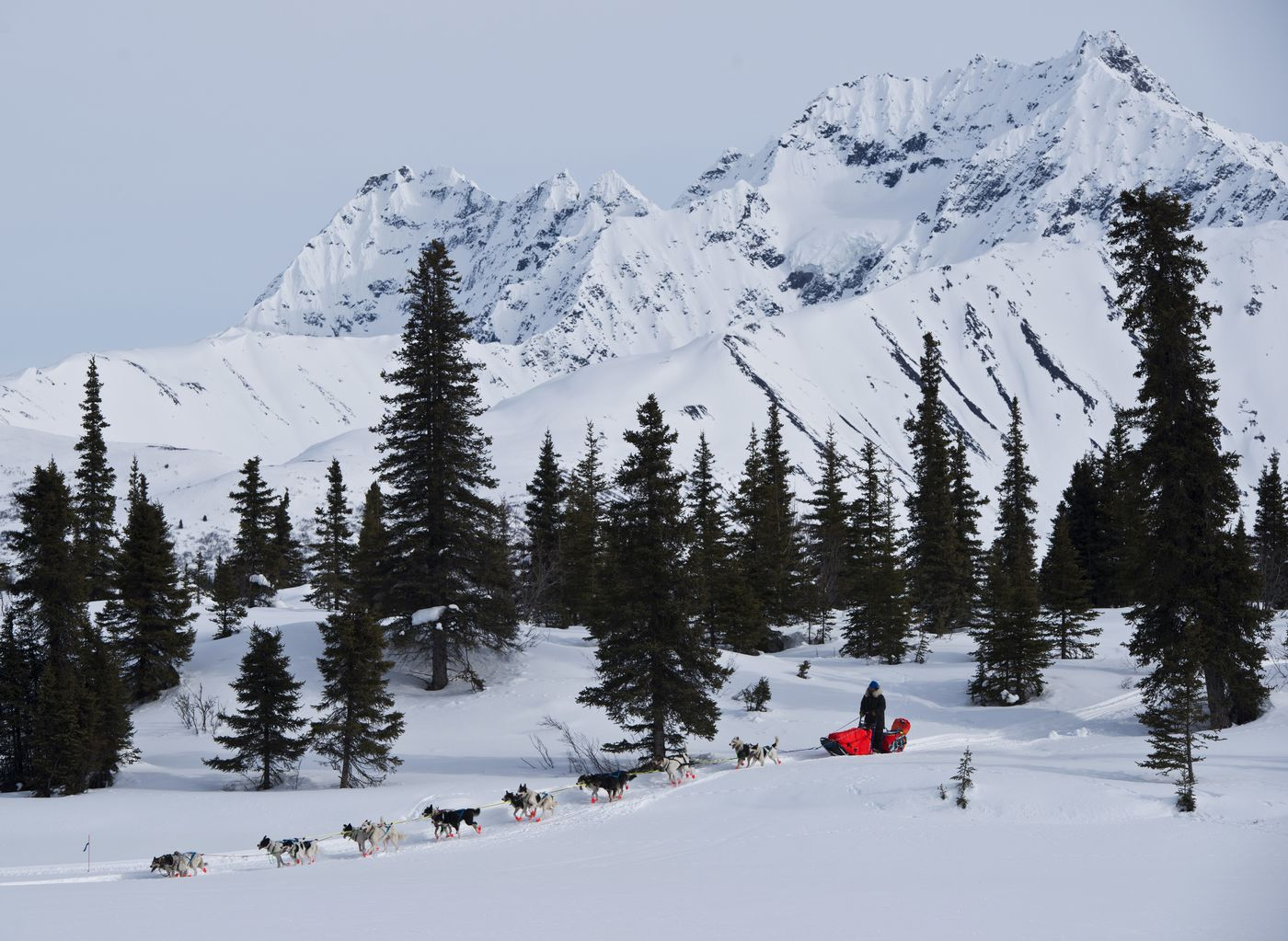 Ralph Johannessen drops down onto the frozen surface of Puntilla Lake in the Alaska Range. Mushers in the Iditarod Trail Sled Dog Race came and went from the Rainy Pass checkpoint for much of Monday, March 7, 2016.