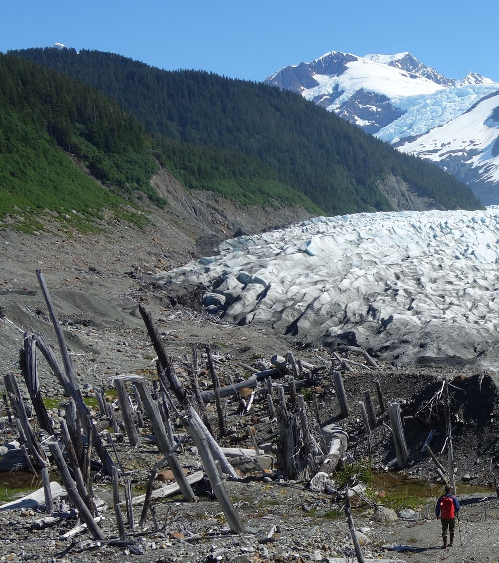Ben Gaglioti walks to a ghost forest near the tongue of La Perouse Glacier, which ran over the trees during the time of the Civil War. (Photo by Ned Rozell)