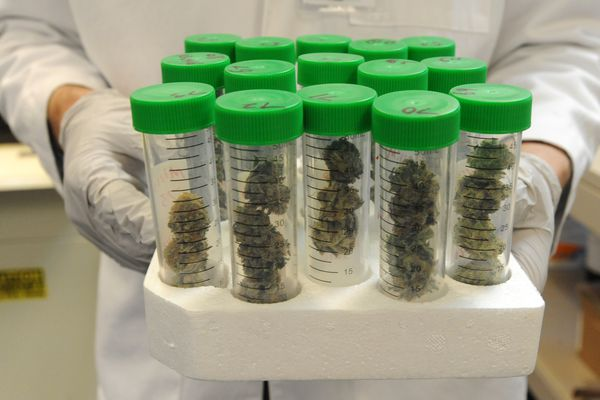 CannTest, the states first marijuana testing lab, opened its doors on Monday morning, Oct. 24, 2016, and began testing the first commercial marijuana samples grown in Alaska. (Bill Roth / ADN)