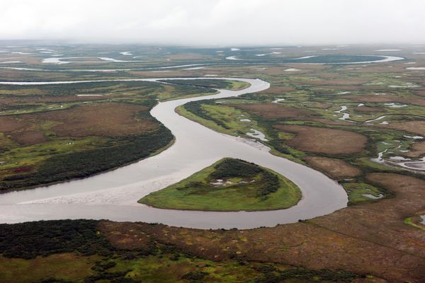 A serpentine river cuts through its own oxbows in an aerial view seen Tuesday, August 26, 2014, in Western Alaska between Bethel and Quinhagak in Southwest Alaska. (Erik Hill / ADN)