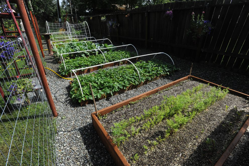 Moose fence helps protect vegetables behind the South Anchorage home of Nancy Grant at 13041 Bates Circle that will be part of the annual city garden tour. Thursday, July 18, 2019. (Bill Roth / ADN)