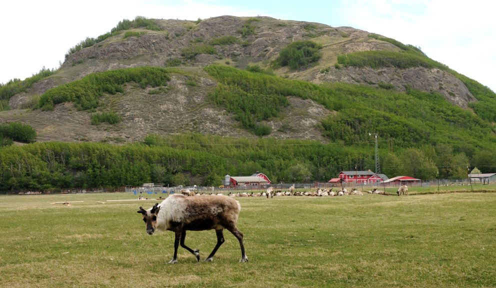 The Reindeer Farm sits on the south side of Bodenburg Butte. (Erik Hill / ADN archive)