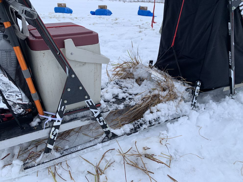 Aniak musher Richie Diehl's sled brake is jammed with grass on Mar. 7, 2019, after going through tussocks on the way to the checkpoint of Iditarod during the 2019 Iditarod Trail Sled Dog Race. (Tegan Hanlon / ADN)