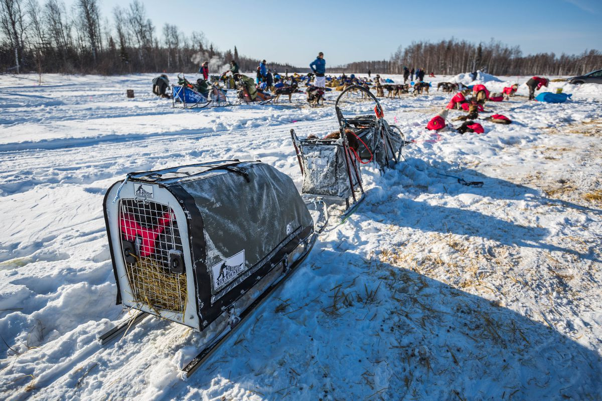 Yvonne Dabakk's sled in the 2015 Iditarod featured a large trailer, which could be used to house a dog if needed. Mushers won't be allowed to carry dogs in trailers during the 2017 race, according to a new rule approved last month. Photographed in the Manley Hot Springs checkpoint on March 10, 2015. (Loren Holmes / Alaska Dispatch News)
