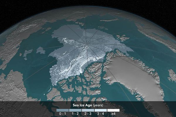 Arctic sea ice coverage, 2016. The area covered by Arctic sea ice at least four years old has decreased from 718,000 square miles (1,860,000 square kilometers) in September 1984 to 42,000 square miles (110,000 square kilometers) in September 2016. Ice that has built up over the years tends to be thicker and less vulnerable to melting away than newer ice. In these visualizations of data from buoys, weather stations, satellites and computer models, the age of the ice is indicated by shades ranging from blue-gray for the youngest ice to white for the oldest. (Visualization by Cindy Starr / NASA)