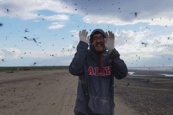 Screenshot of a video featuring Raymond Henry Savik Nashookpuk surrounded by mosquitoes in the Arctic community of Wainwright. July 30, 2018. (Bessie Ahvakana)