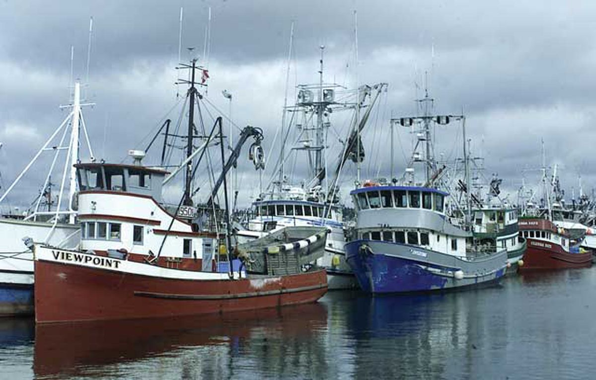 Fishermen that ply Alaska waters got some relief from tariffs recently applied by China to American seafood exports. The 25 percent levies won't be applied to product purchased for reprocessing and sale by China, which covers a huge segment of the roughly $800 million in annual Alaska seafood sales to the nation. (Photo/File/AP)
