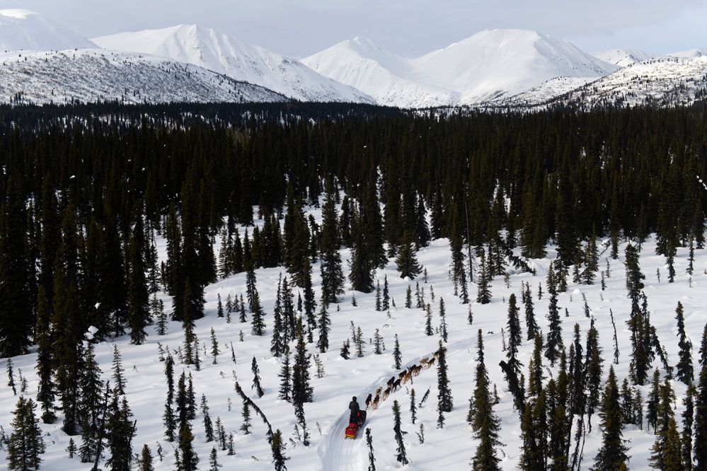 Mitch Seavey heads toward the Rainy Pass checkpoint. Mushers in the Iditarod Trail Sled Dog Race passed by the Finger Lake and Rainy Pass checkpoints as they gained elevation into the Alaska mountain Range on March 4, 2019. (Marc Lester / ADN)