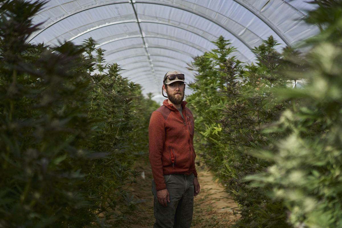 John De Friel, CEO of Raw Garden, at his cannabis farm in Buellton, Calif., this month. The farm sits among cabbage patches and wineries in Santa Barbara County, where agriculture is being reshaped by legalized marijuana. Photo for The Washington Post by Philip Cheung