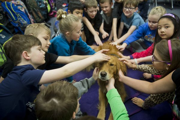 Alix, a golden retriever with National Crisis Response Canines, visits second graders at Bear Valley Elementary School. Two dogs and handlers from the Alaska chapter of National Crisis Response Canines visited students and staff of Bear Valley Elementary School on December 10, 2018. Principal Carissa Cote said she hoped it would help students feel safe upon returning to school after the Nov. 30 earthquake. (Marc Lester / ADN)