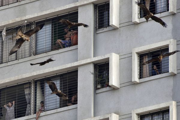 People look out through the windows of their apartments as kite birds fly during lockdown to prevent the spread of new coronavirus in Mumbai, India, Sunday, April 12, 2020. The new coronavirus causes mild or moderate symptoms for most people, but for some, especially older adults and people with existing health problems, it can cause more severe illness or death. (AP Photo/Rajanish Kakade)