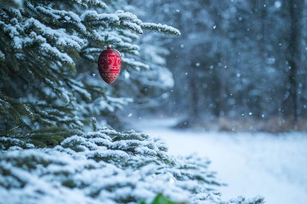 Snow falls on an ornament hanging from a tree in Lyn Ary Park on Wednesday, Nov. 28, 2018. Turnagain residents Alan and Kathy McArthur hung the ornaments earlier this month with their seven-year-old granddaughter, after finding themselves with extra ornaments when they completed decorating the tree at their house. (Loren Holmes / ADN)
