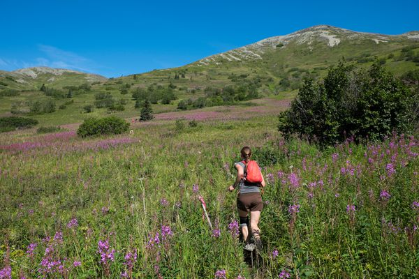 A runner heads back toward Lazy Mountain on Saturday, August 1, 2015. (ADN archive)