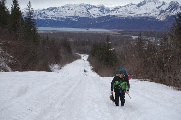 Chris Carlson walks up a hill on the path of the trans-Alaska pipeline near Valdez. (Ned Rozell)