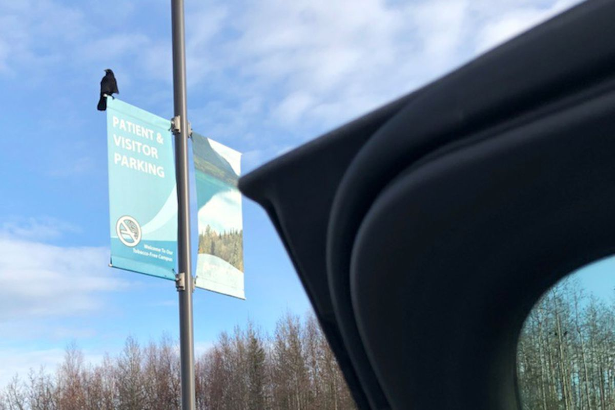 A crow or raven sits atop a sign post in the parking lot of the Central Peninsula Hospital after allegedly dropping a rock on the roof of a pickup truck. (Photo by Cathy McDaniel)