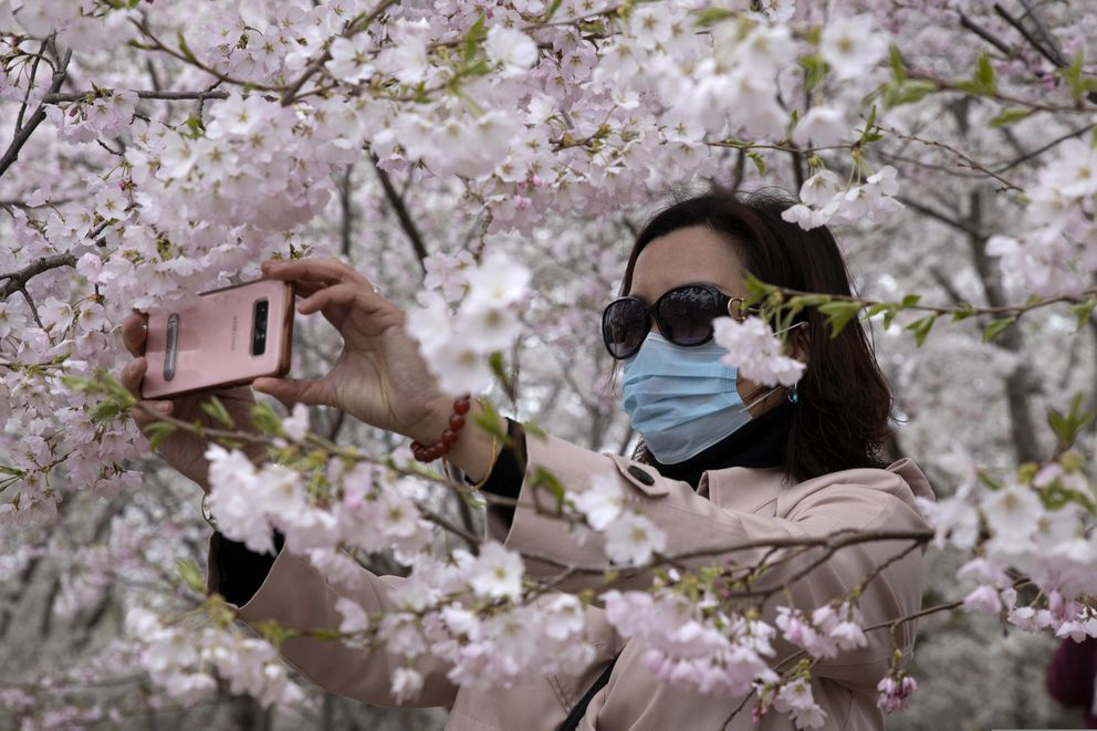 A woman wearing a mask takes photos of cherry blossoms at the Yuyuantan Park in Beijing on Thursday, March 26, 2020. While many of the city's world-famous tourist sites, including the sprawling Forbidden City ancient palace complex, remain closed due to the coronavirus outbreak, spring weather and budding cherry blossoms are coaxing outdoors citizens who have been largely confined to home for the last two months. (AP Photo/Ng Han Guan)