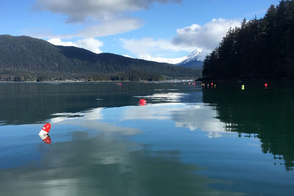 Kelp mariculture research is conducted in Auke Bay in Juneau (Beau Perry / Blue Evolution)