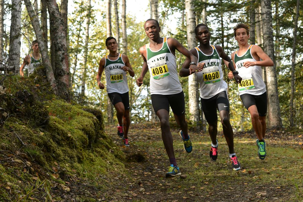 Freshman Henry Cheseto, center left, runs to victory as the UAA men sweep the top seven spots against Willamette University at the UAA Invitational cross-country running meet held at the Beach Lake Trails on Thursday, September 11, 2014, in Chugiak. Flanking Cheseto are teammates Michel Ramirez, left, Victor Samoei, center right, and Dominik Notz.