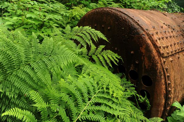 Ferns grow around an old boiler. (Bob Hallinen / ADN)