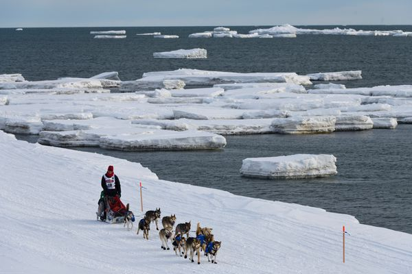 Aliy Zirkle mushes along the shoreline into Nome on March 13, 2019. Zirkle finished the Iditarod in fourth place. (Marc Lester / ADN)