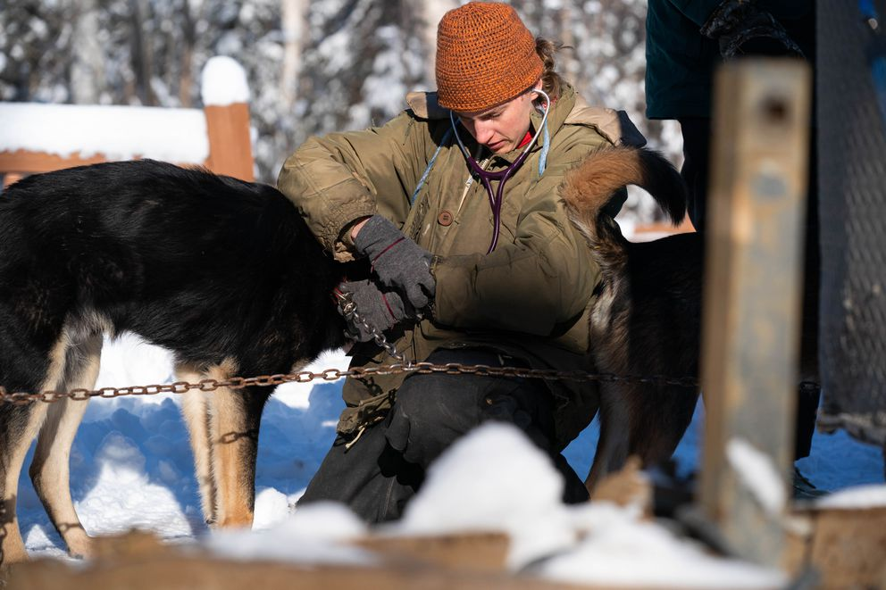 Kristen McCarty, a veterinarian from Ely, Minn., examines a dog in musher Nicolas Petit's team during the Iditarod vet checks Wednesday, March 4, 2020 in Knik. (Loren Holmes / ADN)
