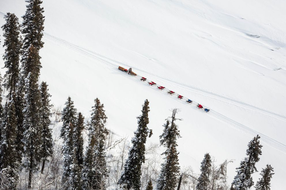 A musher drives their team on the Yukon River between Tanana and Ruby in 2015. (Loren Holmes / ADN)