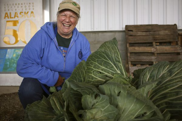 Deb Blaylock next to her 40.5 pound cabbage at the Harvest Fest 2020 in Palmer on Sept. 3, 2020. (Emily Mesner / ADN)