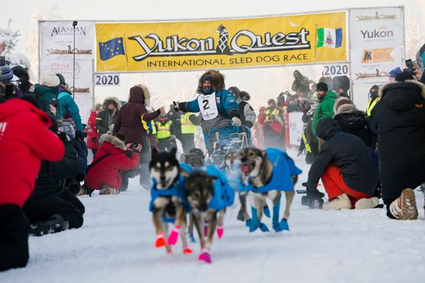 Cody Strathe of Cantwell gives a high five as he leaves the starting line of the Yukon Quest International Sled Dog Race in Fairbanks on February 1, 2020. (Marc Lester / Anchorage Daily News)