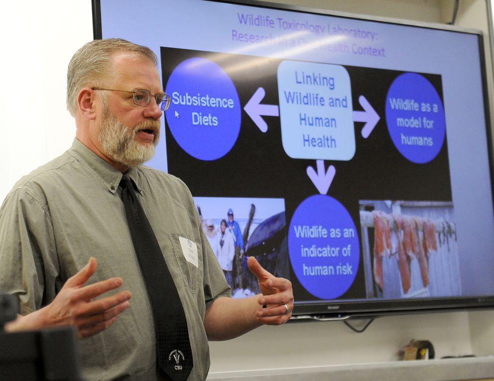 Todd O'Hara, professor of veterinary pharmacology and toxicology in the Department of Veterinary Medicine at UAF in Fairbanks, Alaska, talks about their work on toxins in the environment on Friday, May 12, 2017. (Bob Hallinen / Alaska Dispatch News)