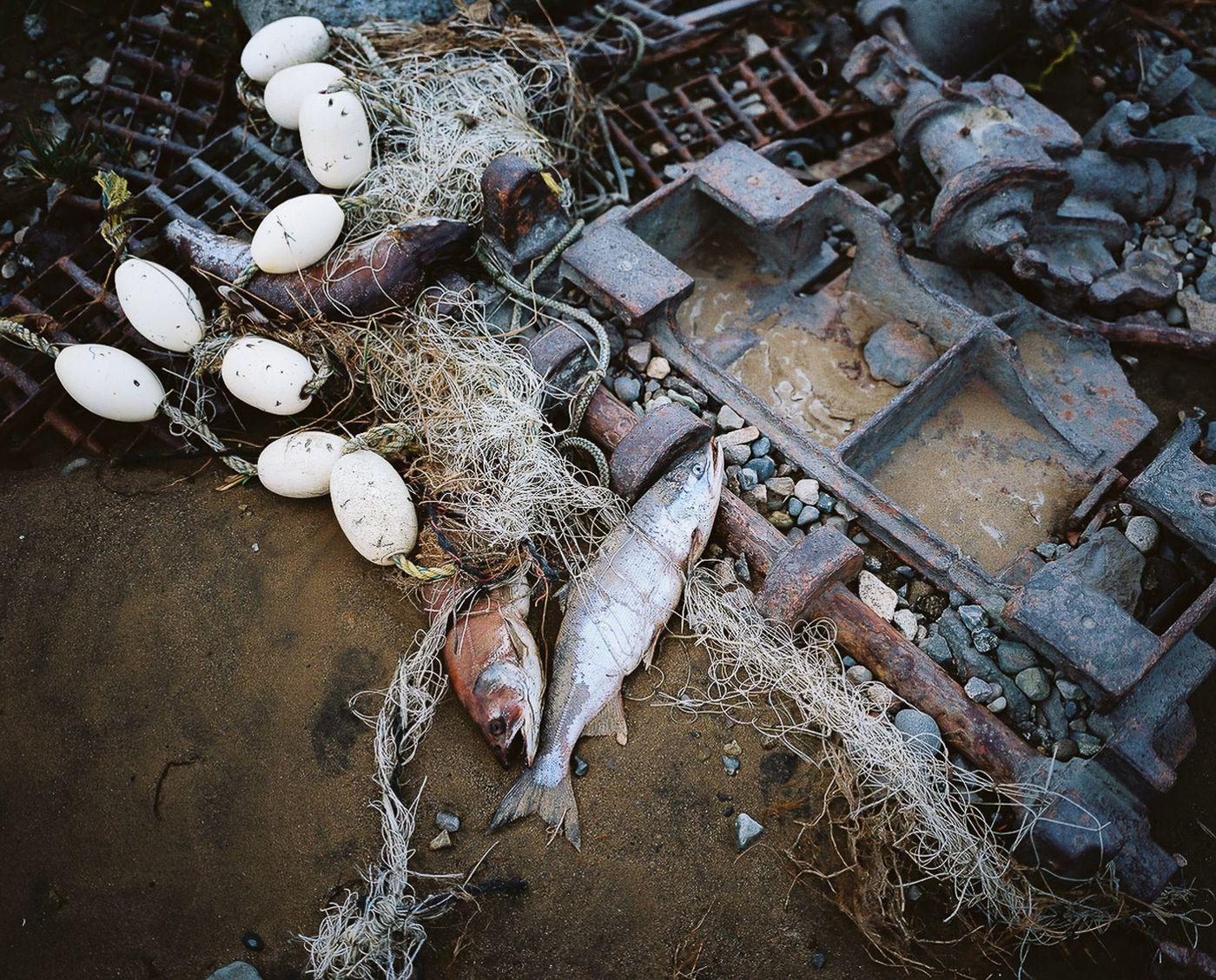 Fish, floats and nets make up a beach still life near Graveyard Point.(Courtesy Corey Arnold)