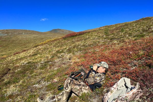 Author Rick Sinnott glasses terrain off the Denali Highway looking for animals in the Nelchina Caribou Herd in early September. (Lisa Sinnott)