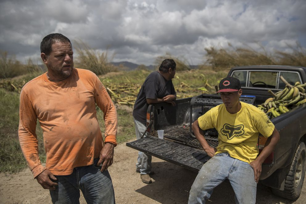 Jose A. Rivera, left, with his brother Angel Rivera and his nephew Javier Cacho Serrano, look over his destroyed plantain crops in Yabucoa, Puerto Rico, Sept. 24, 2017. (Victor J. Blue/The New York Times)
