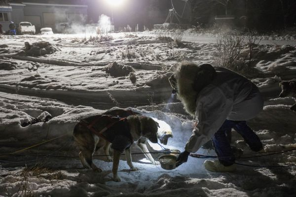 Jessie Holmes feeds his dogs at the Kalskag checkpoint during the Kuskokwim 300 sled dog race early Saturday morning, Jan. 21, 2017. (Loren Holmes / Alaska Dispatch News)