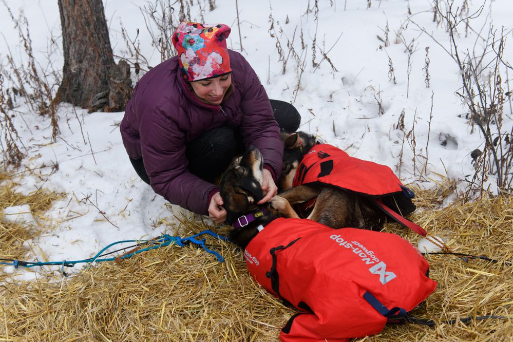 Iditarod rookie Blair Braverman tends to her team in Rohn on March 5, 2019. (Marc Lester / ADN)