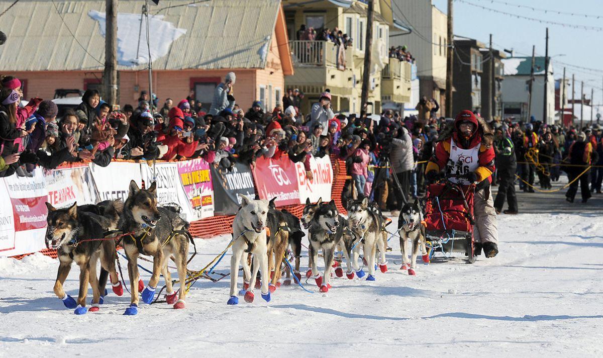 Mitch Seavey comes into the finish chute to win the 2017 Iditarod Trail Sled Dog Race. (Bob Hallinen / ADN)
