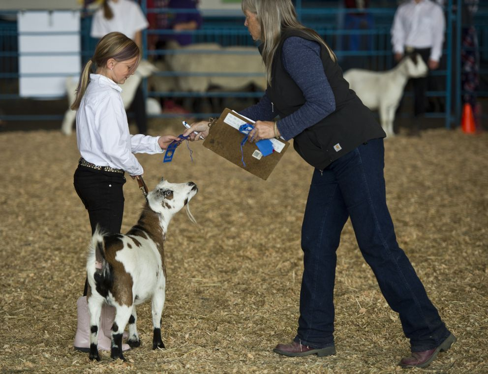 A competitor receives a ribbon for her goat. (Marc Lester / ADN)