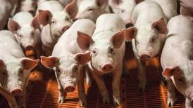 Scientists restore some brain cell functions in pigs four hours after their death
