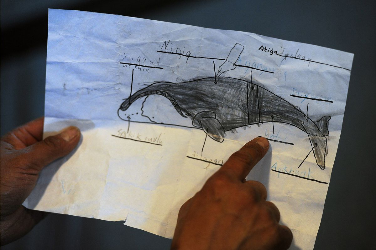 Whaling captain Herman Ahsoak shows schoolwork teaching the parts of a bowhead whale at his home on Sept. 23, 2015, in Barrow. (Erik Hill / ADN)