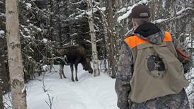 Wildlife officials prepare for Anchorage moose survey with help from citizens