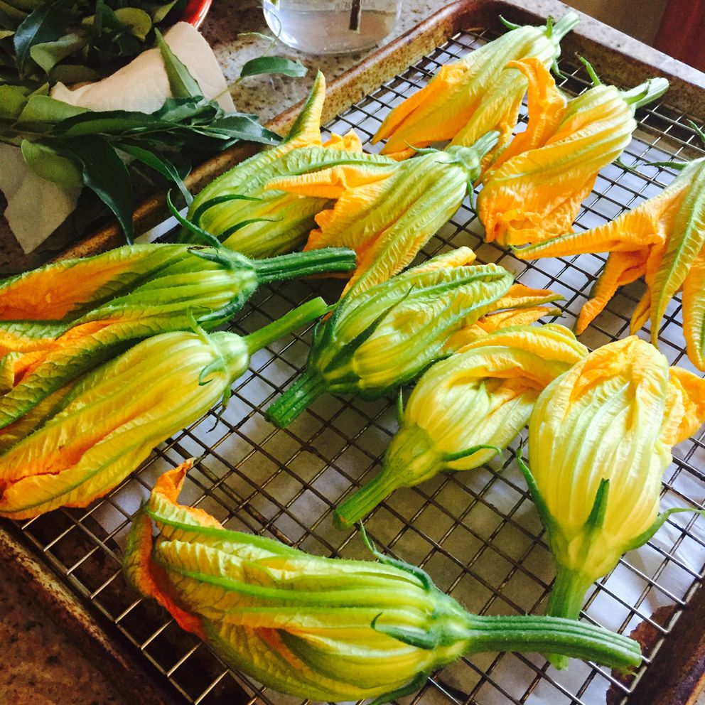 Pick zucchini blossoms early in the day when it's cool. Brush off any insects with a damp paper towel. (Photo by Kim Sunée)